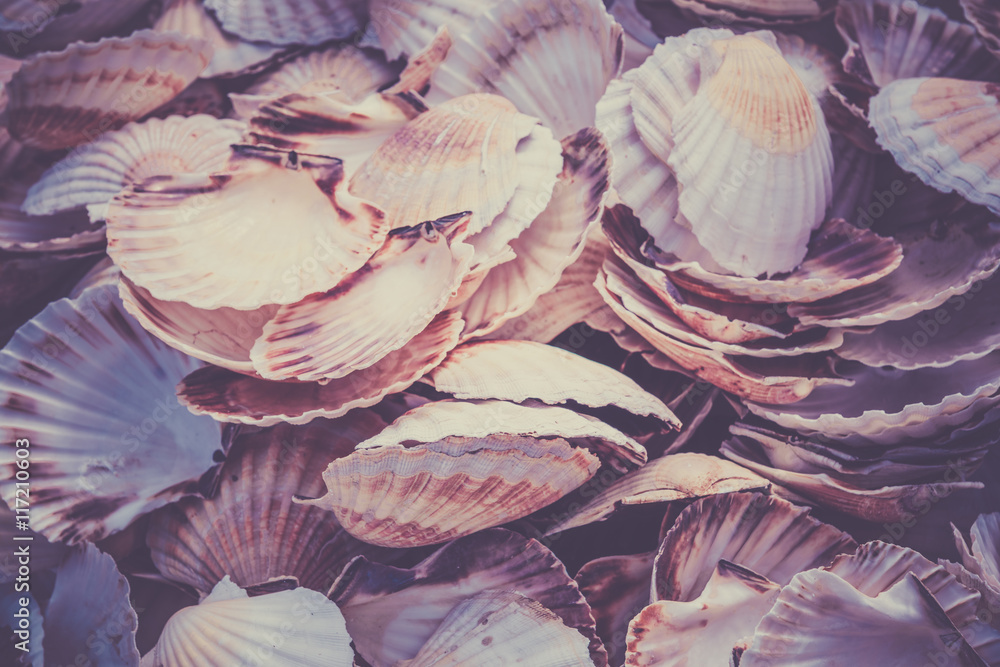 Fototapeta Scallop shells heap
