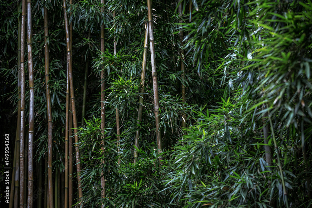 Fototapeta Green Bamboo forest pattern