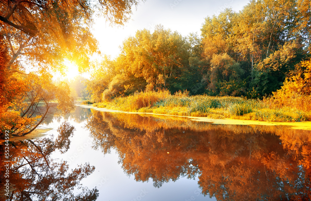 Fototapeta River in a delightful autumn