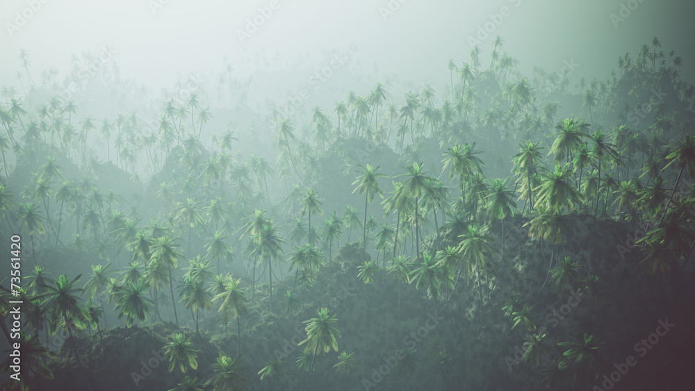 Fototapeta Aerial of palm forest in the