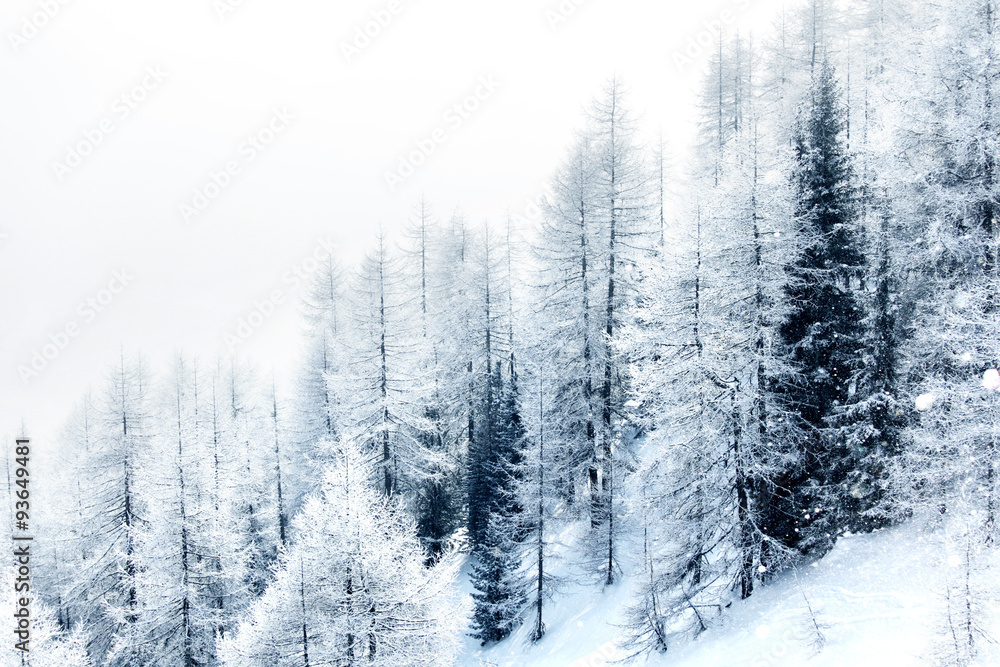 Fototapeta Snow covered forest