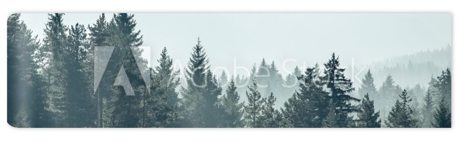 Fototapeta Pine trees forest stylized