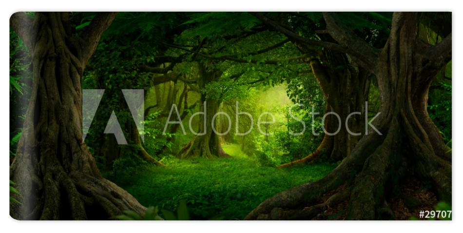 Fototapeta Deep tropical jungles of