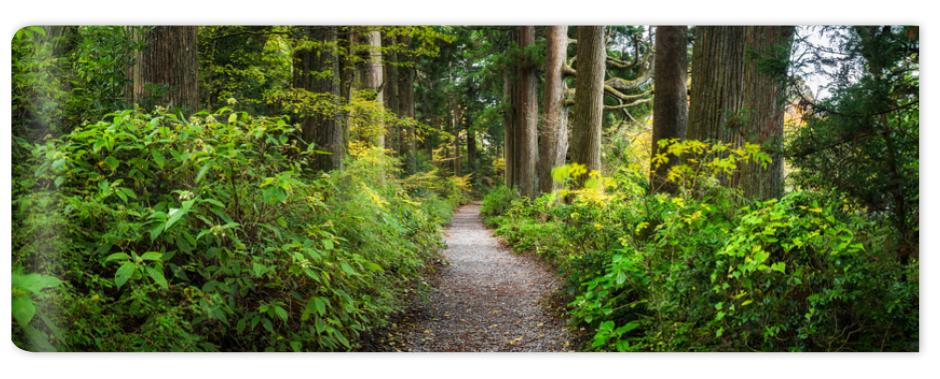 Fototapeta Beautiful forest path as